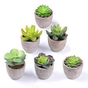 SucculentsIf